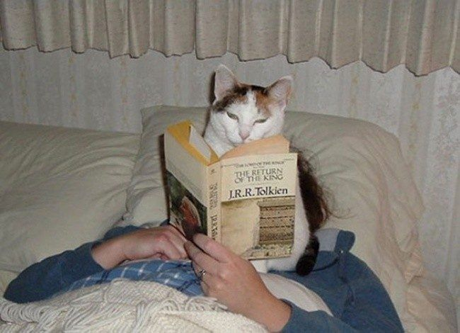 This cat has good taste in literature