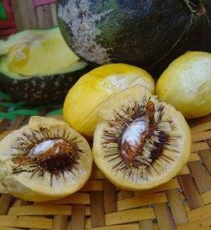 Pequi - Frutos do Brasil - Arara