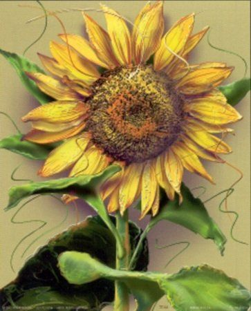 """""""There are always flowers for those who want to see them"""" Bring home this beautiful sunflowers picture art print poster which will surely enhance your home interior. This contemporary style wall art will surely enliven the dull wall of your home and add colors to it. Hang this floral poster in your living room and get ready to get compliments from those who visit your home. Discover the uniqueness of this poster and make your order today for its durable quality and excellent color accuracy."""