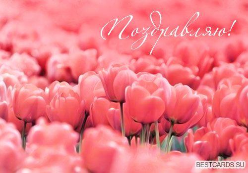 Открытка «Поздравляю!» с тюльпанами