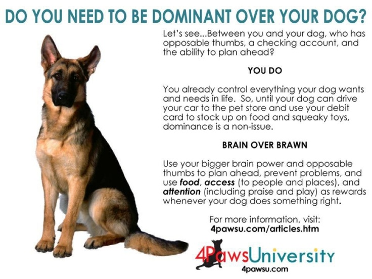 how to get dominance over your dog