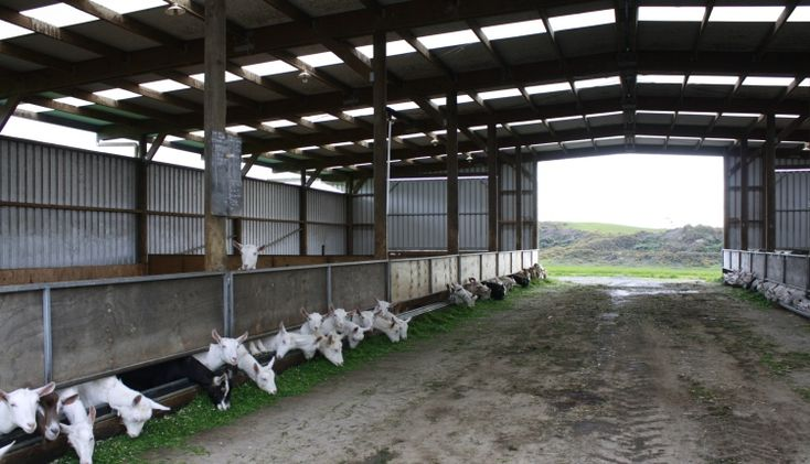 Goatvet likes this website about sheds for dairy goat for Farm shed ideas