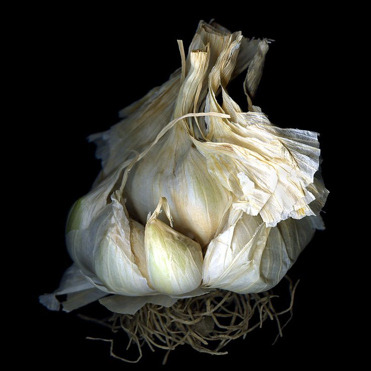 garlic.. I use garlic almost everyday. In soups, meat, marinades, stews & every time I saute' vegetables. It's necessary for good health, building up immune systems, regulating body temp and more. Roasted,raw or cooked it aids in waste elimination therefore weight loss and toxin cleansing.