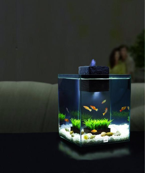 1000 images about fish tank on pinterest red cloud led for Zen fish tank