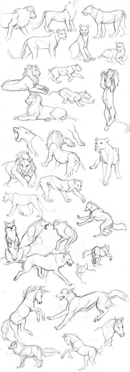 Löwe, Wolf, Pferd