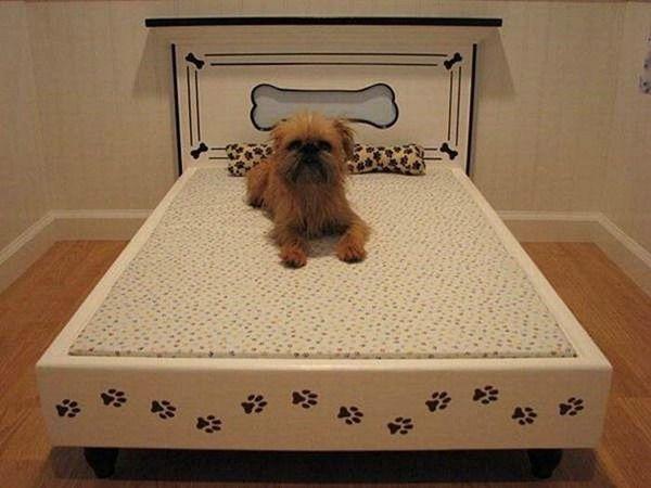 Amazing Dog Houses | Amazing Dog