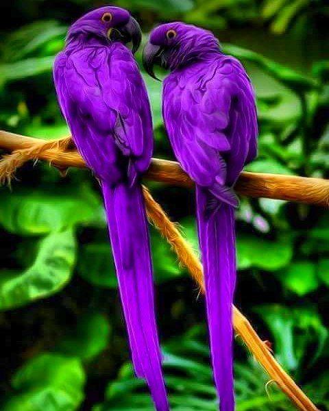 I love purple! :)