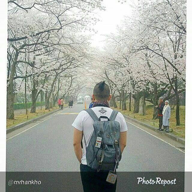 Foto tas Lomberg Denise Grey di Sakura Land Korea by @mrhankho  #sakuraland #japan #jepang #adventure #cherryblossom #holiday #traveller #jalan2man #travel #adventurer #selfie #yolo #vscodaily #wanderlust #sakura #instagramjapan #instagram #monvoyatjapan #北海道 #traveler  #foto #lombafoto #photocontest #photo #tas #denim #jeans #indonesia