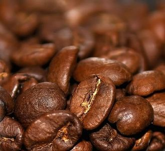 COFFEE - How to Grow your Own Organic Coffee Beans.