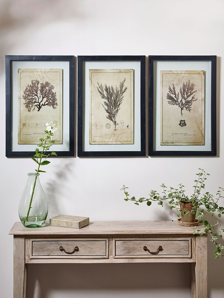 Three Framed Botanical Prints – Marine Plants | Cox & Cox Gift Guide