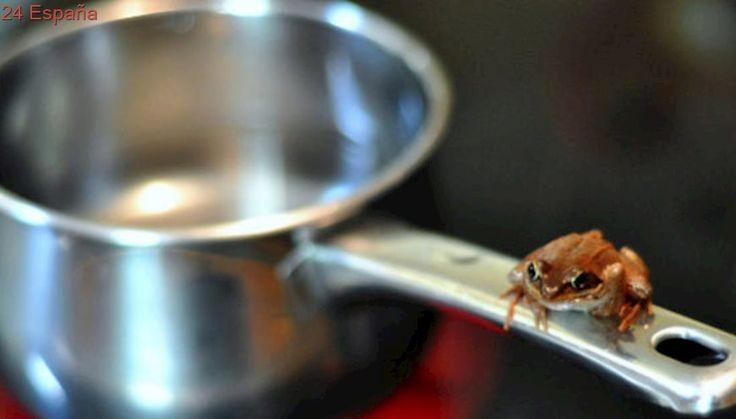 'Boil the Frog', la web que crea las listas de Spotify más curiosas del mundo