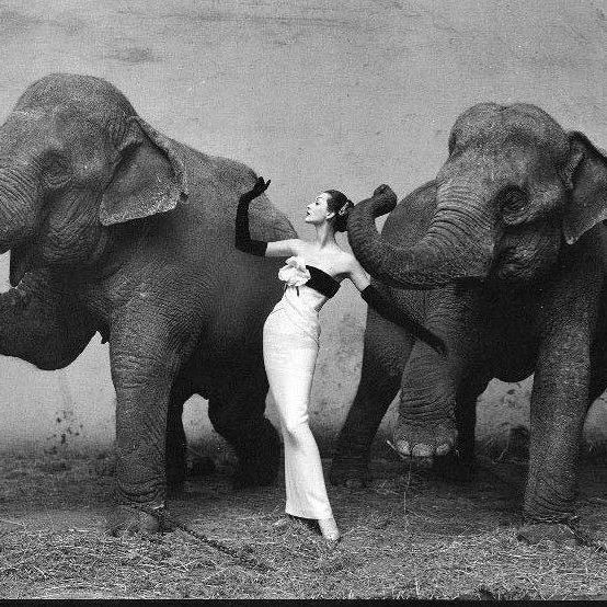 Reto 10. Pese a la gran variedad y cantidad de fotografías que hay, esta es la que más me ha llamado la atención. Dovima with Elephants (1955) - Richard Avedon #PU0911 #CosasDePubli #RetoVisual0911