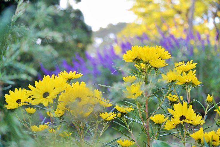 秋の花 10月