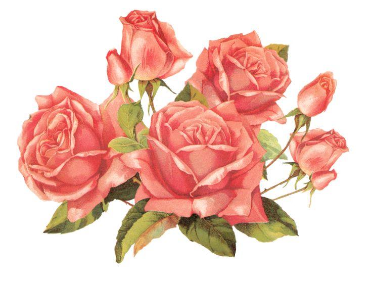 Rose pink by jinifur.deviantart.com on @DeviantArt