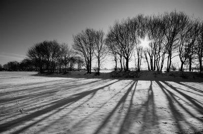 strijklicht- het licht gaat langs de bomen je zit zo goed de textuur van de bomen ook krijg je hele lange schaduwen