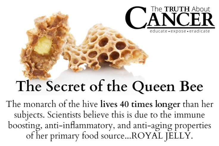 Royal Jelly is the substance fed to Queen Bees giving them superior lifespan and strength. Discover what research is showing it does to cancer. Click on the image above to discover more about Royal Jelly Benefits.