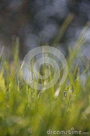 Abstract background of shining a bright morning dew.