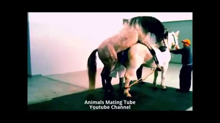 Horse Mating With Female Horse Animals Mating Like Human-9448