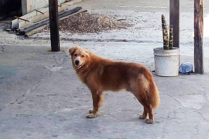 Segundo estudos, os cães veem as famílias humanas como seu próprio grupo, onde encontram segurança, abrigo e alimentação.