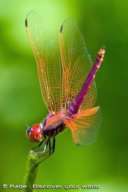 Color Inspiration- Dragonfly