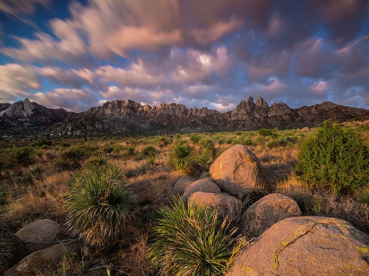 Soaptree yuccas soak up morning light in southern New Mexico. Organ Mountains-Desert Peaks National Monument in southern New Mexico was established in May 2014, adding to the U.S.'s impressive total of 758 wilderness areas in 44 states—a total of 110 million acres. Photograph by Michael Melford, National Geographic, September 17, 2014