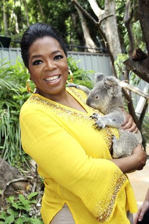 Hold a koala bear