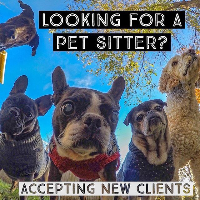 From Saltydog Petsitting Salty Dog Is Accepting New Clients We