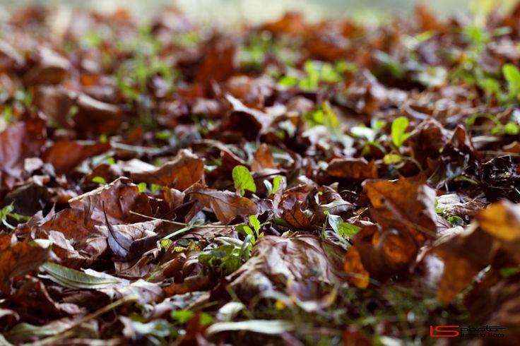 Autumn by Laszlo Som on 500px