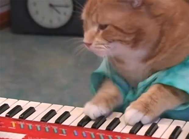 Γάτες που παίζουν... αρμόνιο (videos) http://bit.ly/1oaI17E