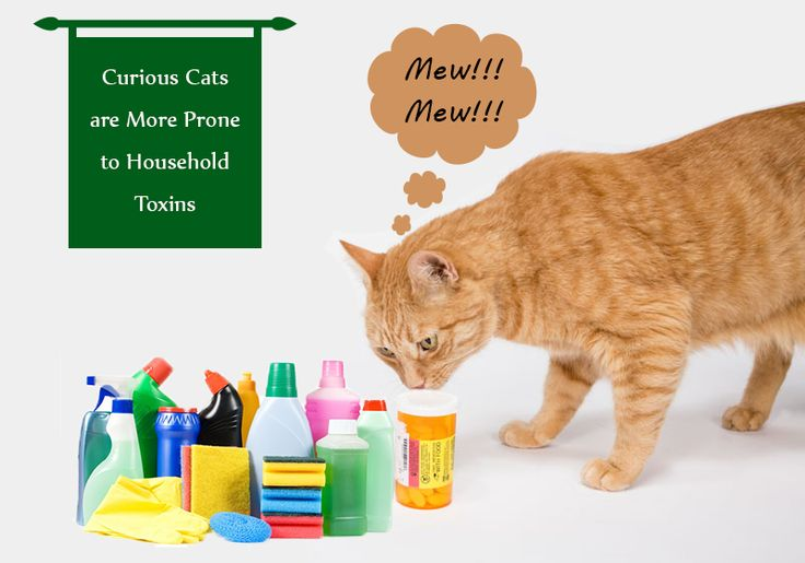 Are you aware of lurking household dangers that can harm your cats? -