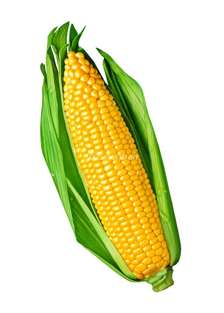 Sweet corn illustration by Jean Charle