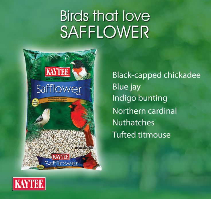 You'll attract a variety of birds when you use safflower seeds.