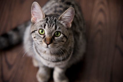 How to clean cat urine stains and odors