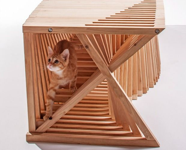 This Is What Happens When Architects Design Homes for Your Cat