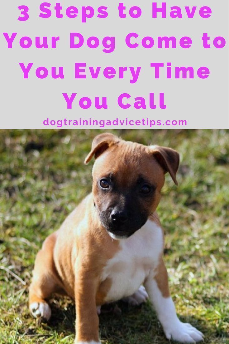3 Steps To Have Your Dog Come To You Every Time You Call Basic
