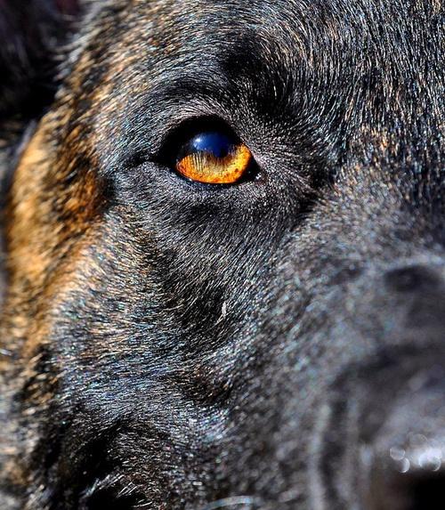 police dog photography