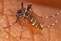 Penyebabnya Penyakit Malaria (DBD) Gejala, Mencegah serta Cara Mengobati
