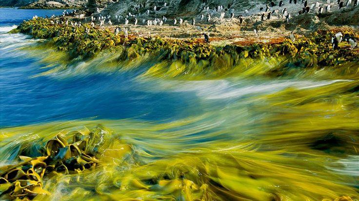 Tidal Surge, New Zealand, Sept. 9, 2015.
