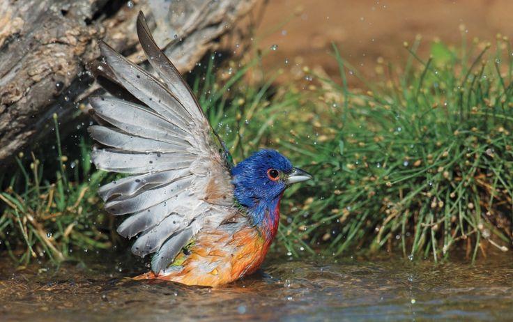 Audubon Photography Awards 2015: le più belle foto di uccelli - Focus.it