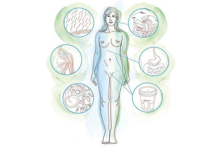 Die PH-Werte im menschlichem Körper Illustration