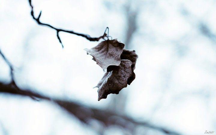 Autumn Landscape Hd