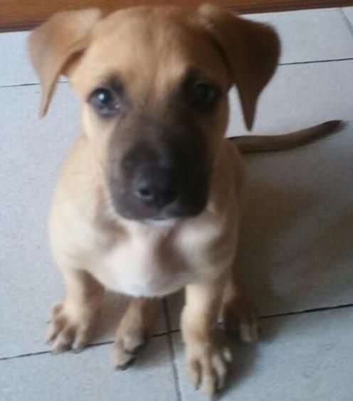 Tiendanimal - Tienda Online de Productos para Mascotas