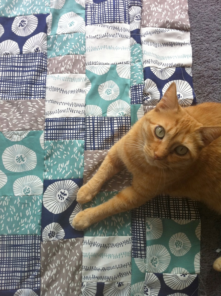 Webster on a Lotta Jansdotter quilt