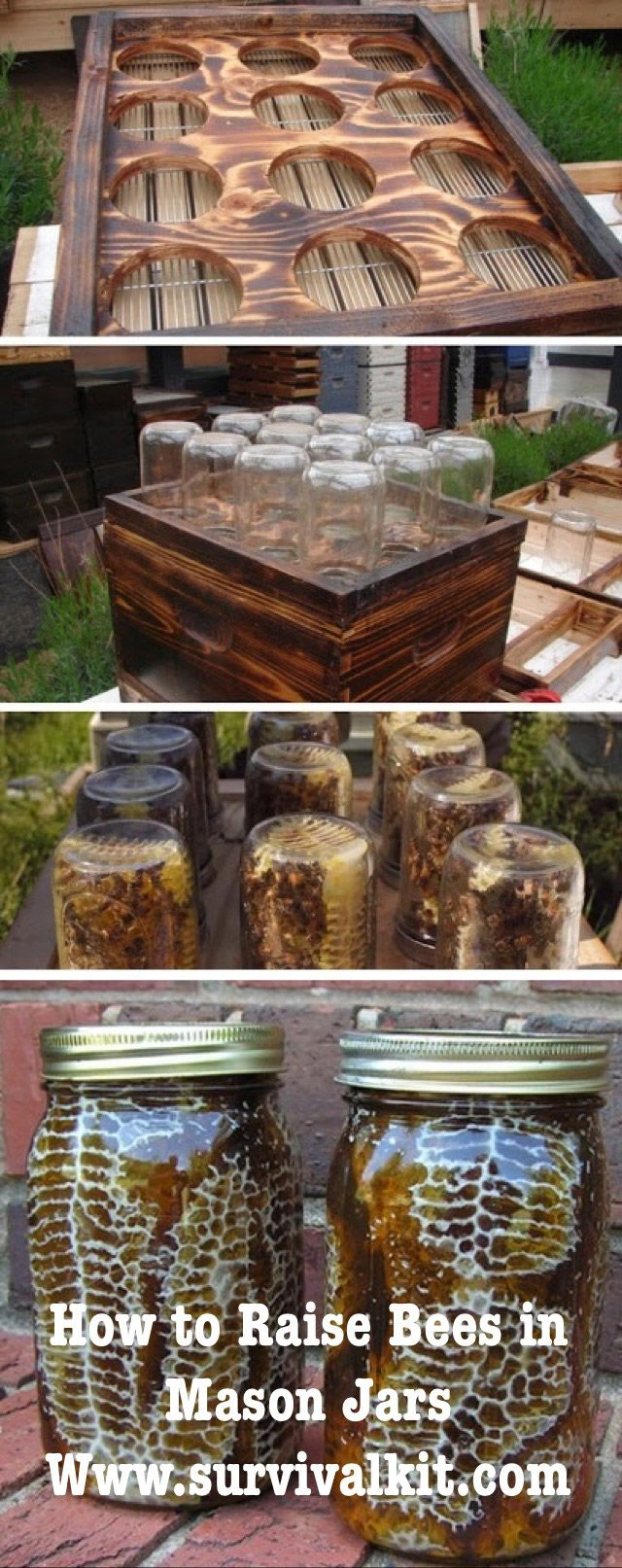 How to Raise Honeybees in Mason Jars Getting Started Before you do anything, it's important to use common sense and realize that not everyone can build a hive for thousands of bees in their back ya...