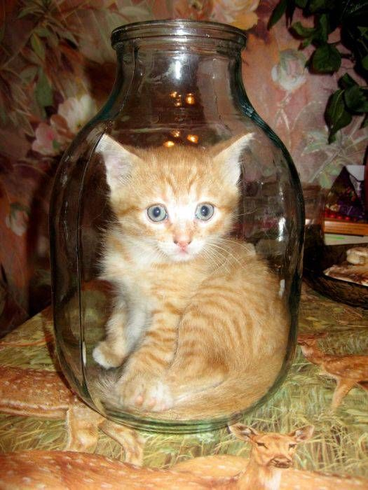 демотиваторы кошки коты и котята