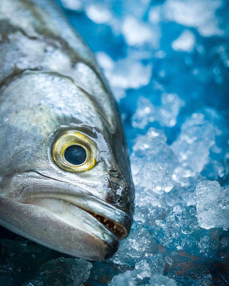 """10 """"Μου αρέσει!"""", 1 σχόλια - Theodosis Georgiadis (@theodosis) στο Instagram: """"Fresh fish 🐟 photo by #theodosisgeorgiadis #foodphotography #instafood #foodstyling #foodstagram…"""""""