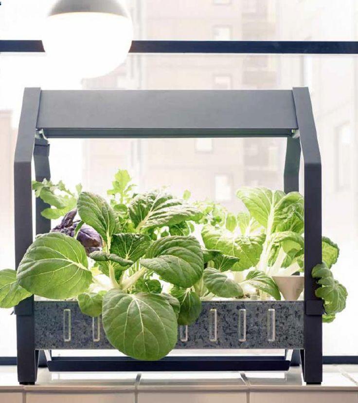 78 meilleures id es propos de hydroponics kits sur for Kit culture interieur