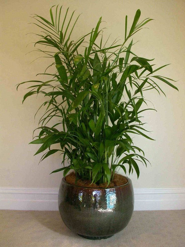 Air Purifying Plants For Bedroom: 24 Best Most Air-purifying House Plants Images On