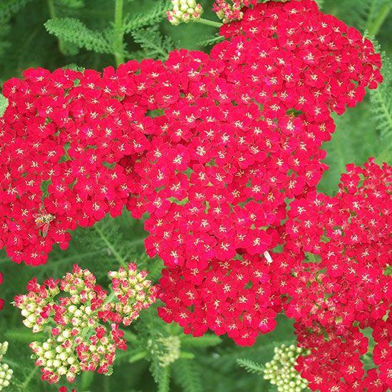 Heat Tolerant Perennials: Heat-Tolerant Plants For The Northeast