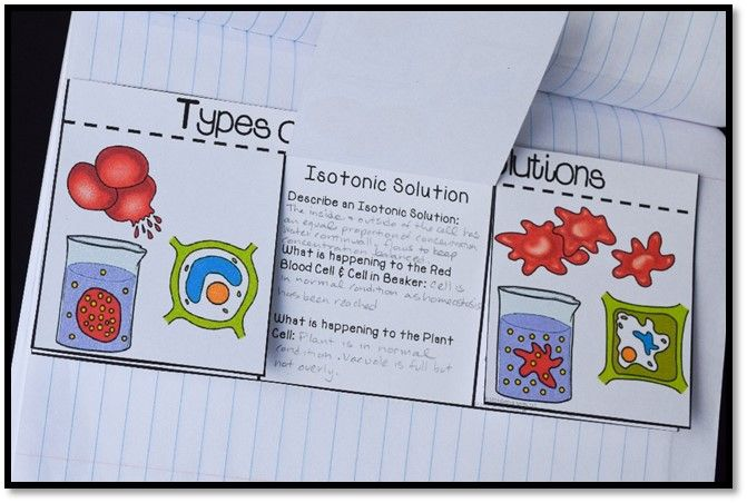 Love this types of osmotic solutions:  flip chart for interactive science notebooks. Features hypertonic, isotonic, and hypotonic solutions.
